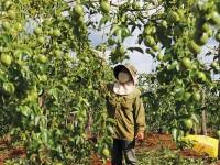 Japanese firm seeks to build clean vegetable plant in Ha Nam