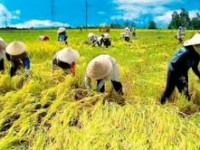 FTAs provide plentiful opportunities for agriculture